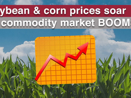 Highest Soybean & Corn Prices as Commodity Market Boom