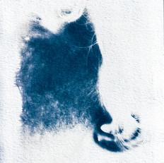 Cyanotype_PrintScans_Edits_028.JPG