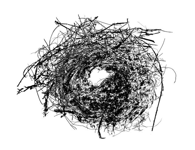 Nest_Invert_CleanedUp_Edit.tif