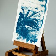 cyanotypeprints_jpg_01.JPG