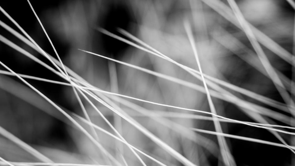 Cacti Detail 2