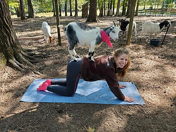 goat yoga with adult.jpg