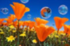 PoppyFieldHHiLogoBubble.jpg