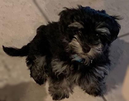 ziggy pup2.jpg