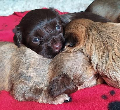 711 sleepy pups thumper cu.jpg