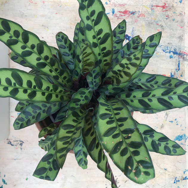Houseplants for classrooms