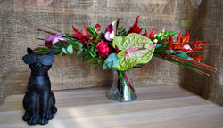 Linéaire Anthurium vert rouge