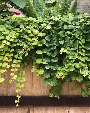 still vines_edited.jpg