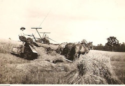 Farming in Delta