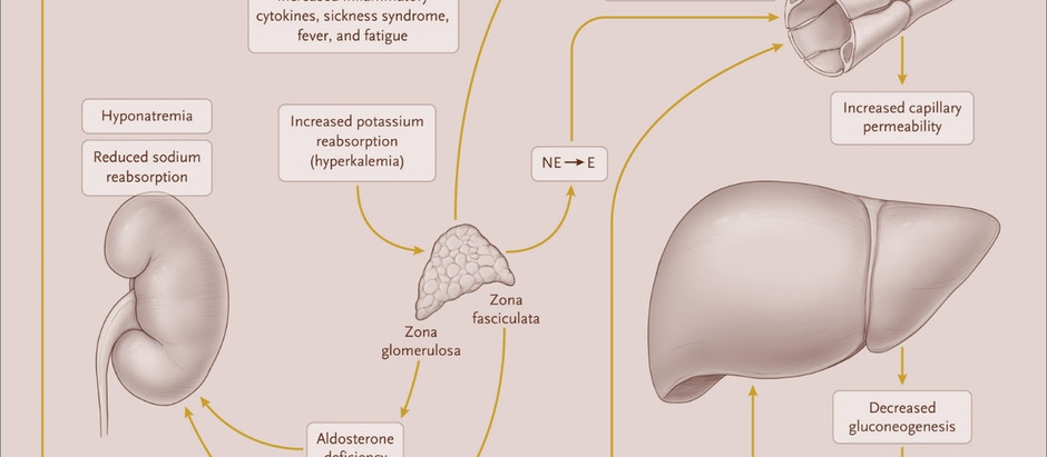 Scaffophysiology: Adrenal Crisis