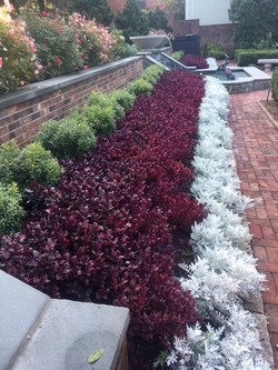 Gardens flanking hot tub