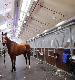 stall horse