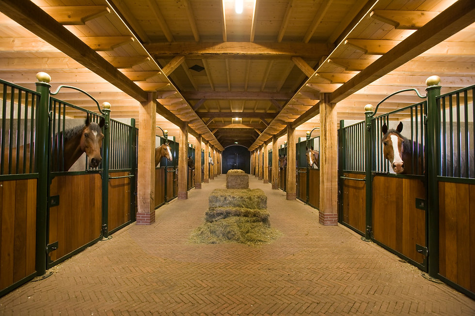 race and dressage horse stall design