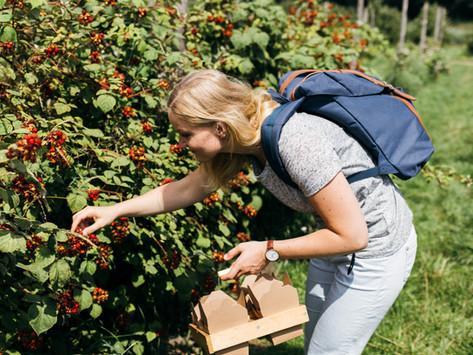 Fruit plukken bij Fruittuin van West