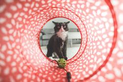cat-932846