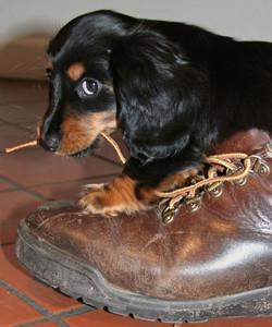 puppy-1577613_1920.2.jpg