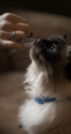 cat-treat-photo-205975-3.jpeg