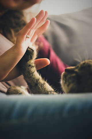 cat-highfive-photo-38867-2.jpeg