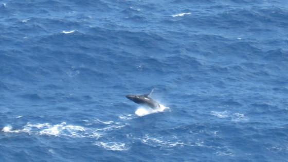 Balade Baleine