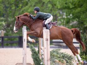 BRAVE HORSE WEEK I 2017