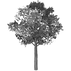 Tree (1).png