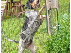 BRUDER MEETS A PORCUPINE: ADVENTURES OF THE HAPPY HOUND
