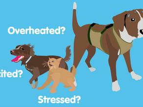 Establishing a Baseline Temperature For Your Pet