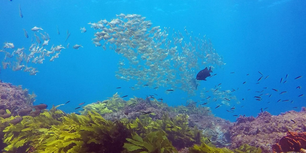 Skipper's choice Double Dive