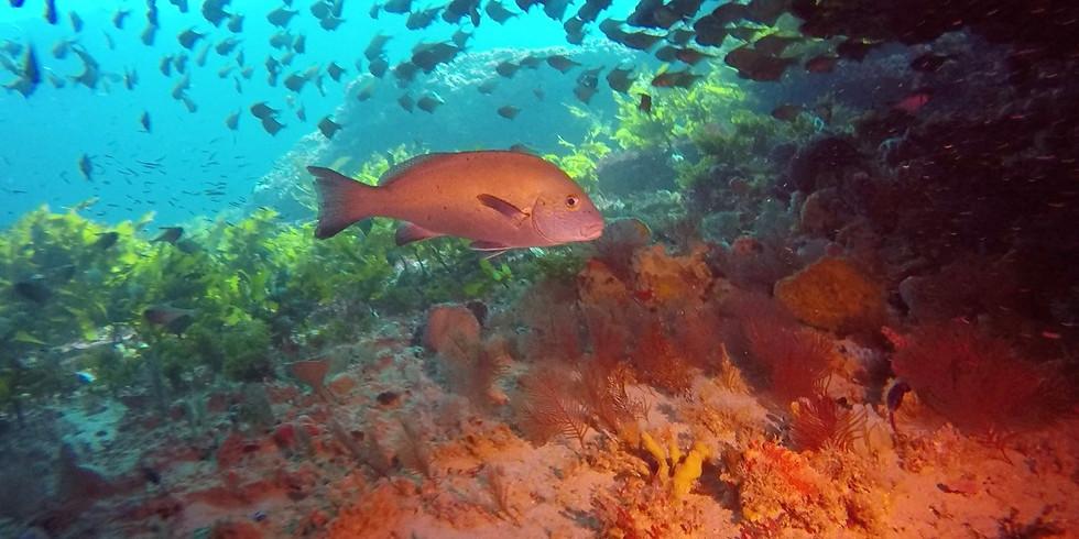 Stragglers Reef (Single)