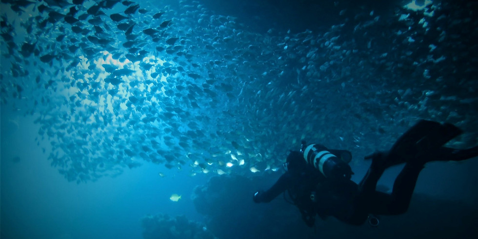 Mike & Steve's Favourite Dive Spots around Rotto - Double Dive