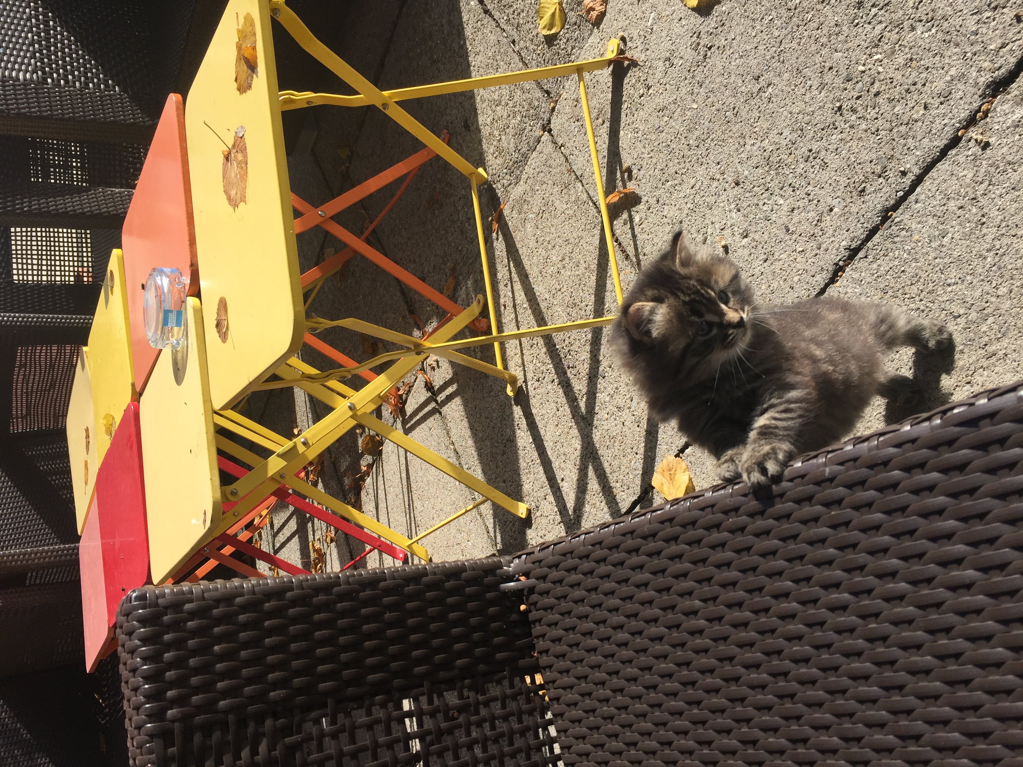 Babycats@AmdenLodge Bienenheim