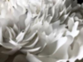 Petal Form by GiGi.jpeg