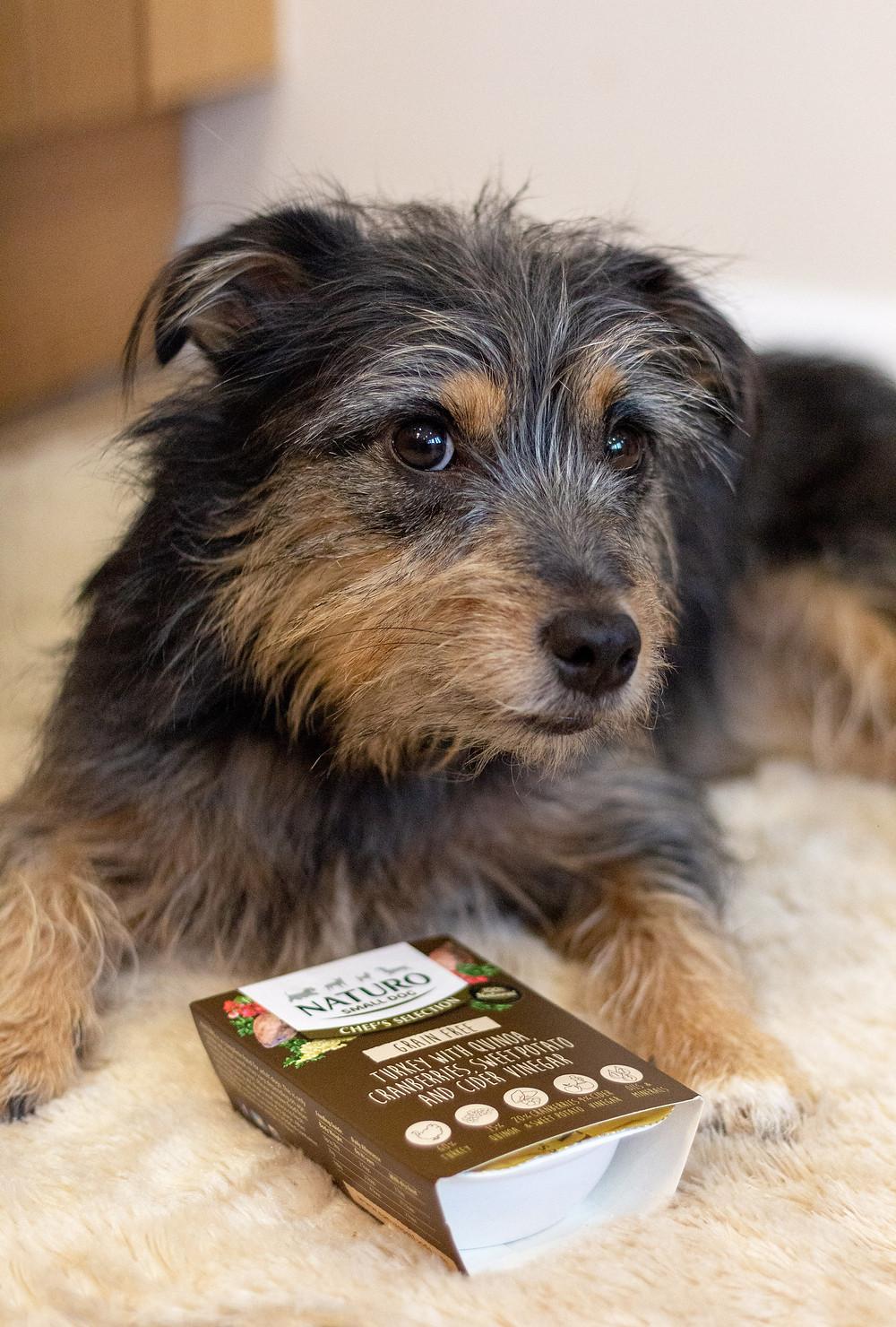 Paisley Dog Blog Turkey Naturo