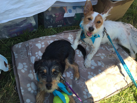 Wilbur & Paisley at Dogs Unleashed