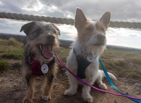 Dog Friendly UK 2019: Northumberland