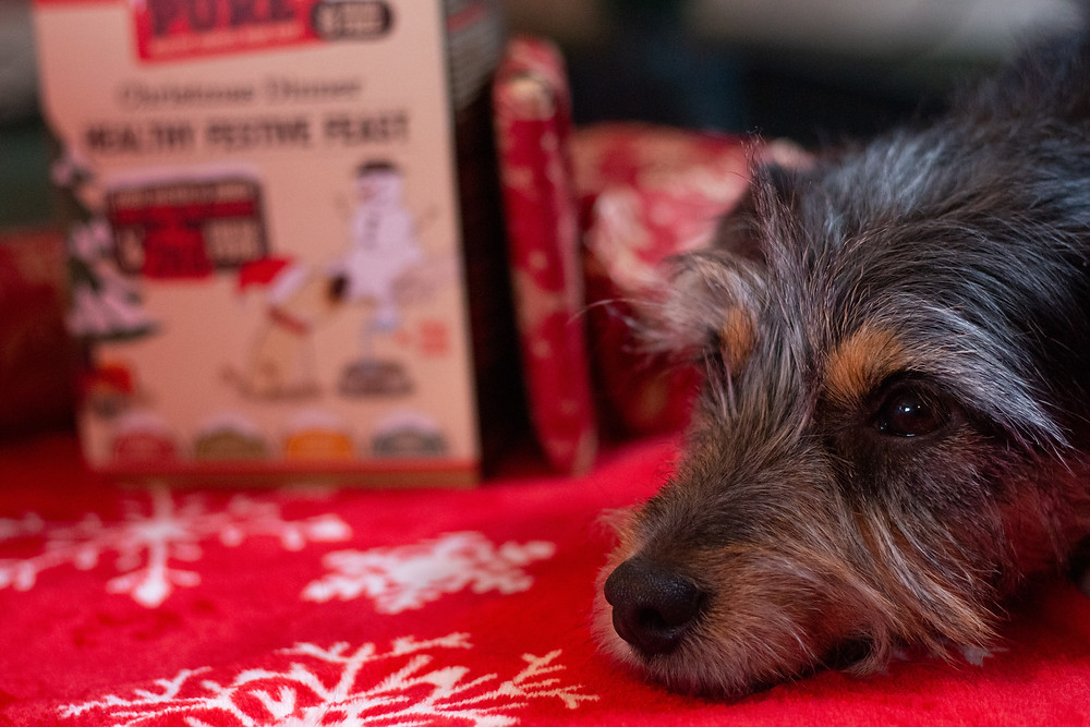 Christmas Pure Pet Food