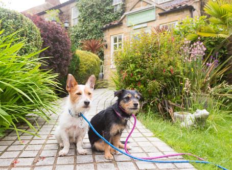Wilbur & Paisley Go Luxury!