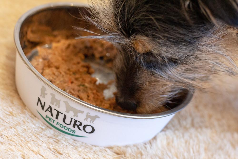Paisley Naturo Dog Blog