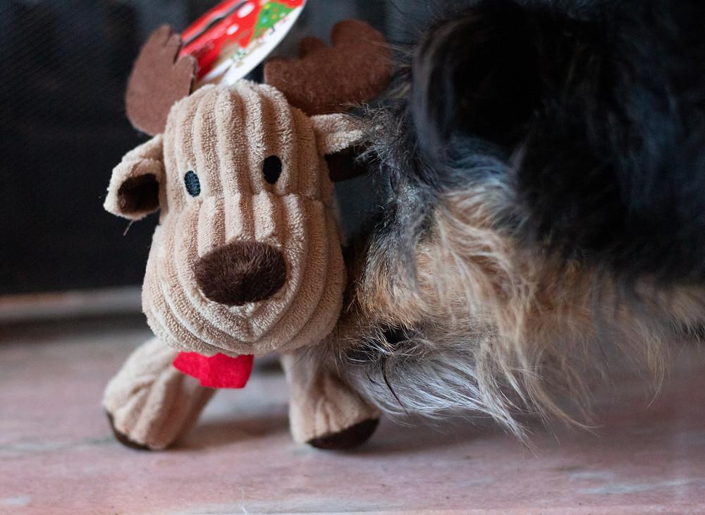 Reindeer Petface