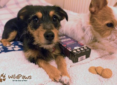 WildPaws Top Pick: Wilbur & Paisley Love Bedtime Biscuits