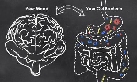 Vitalité et Sagacité : le microbiote un organe sous-estimé