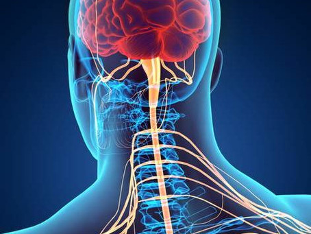 Le « stress » : ses conséquences sur le cerveau et le nerf vague