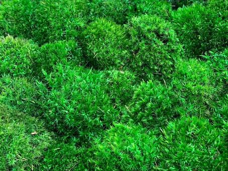 Жемчужина в интерьере - это зеленый мох