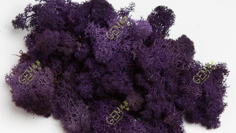 Норвежский мох ягель Грин Екко Мосс фиолетовый