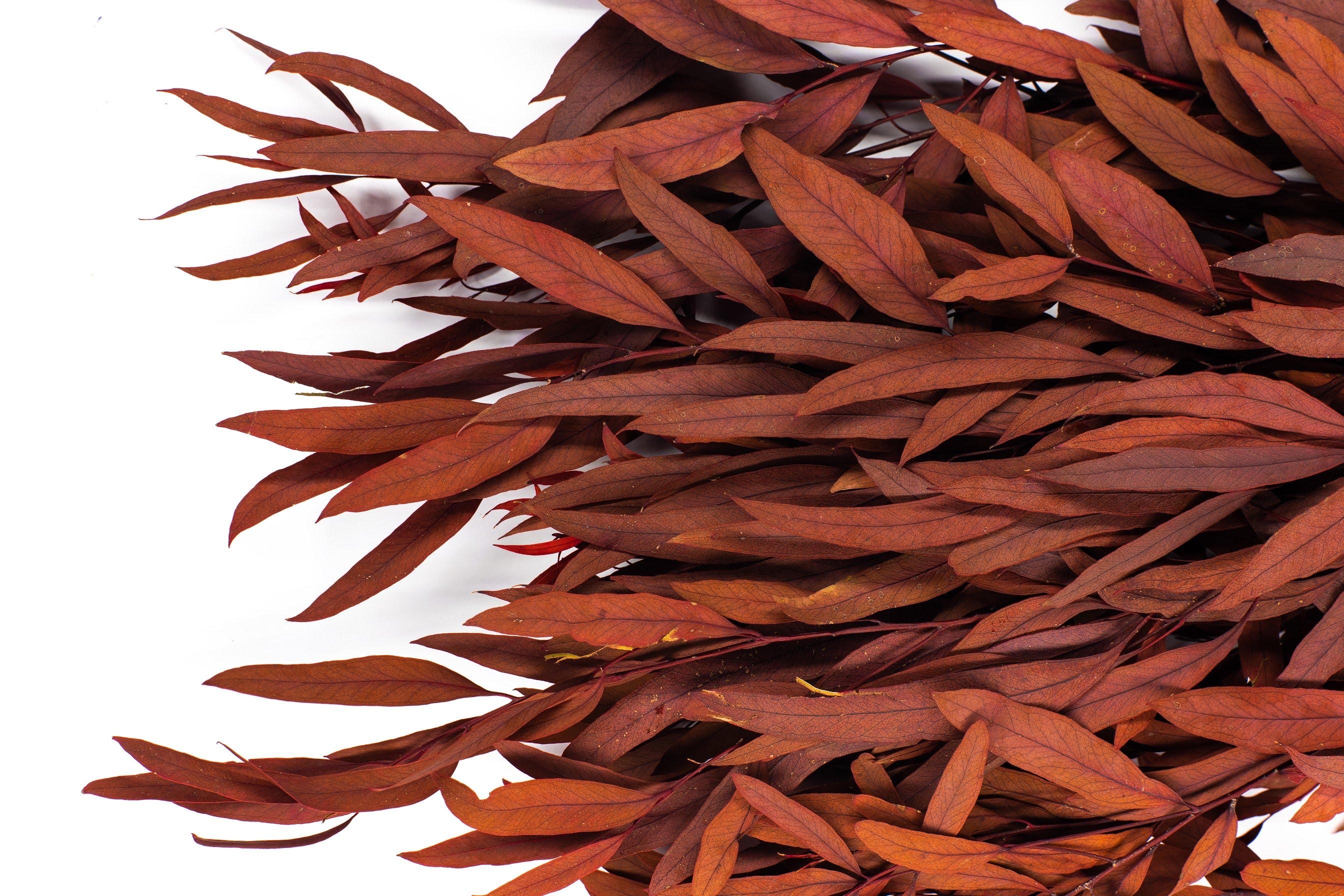растение николи