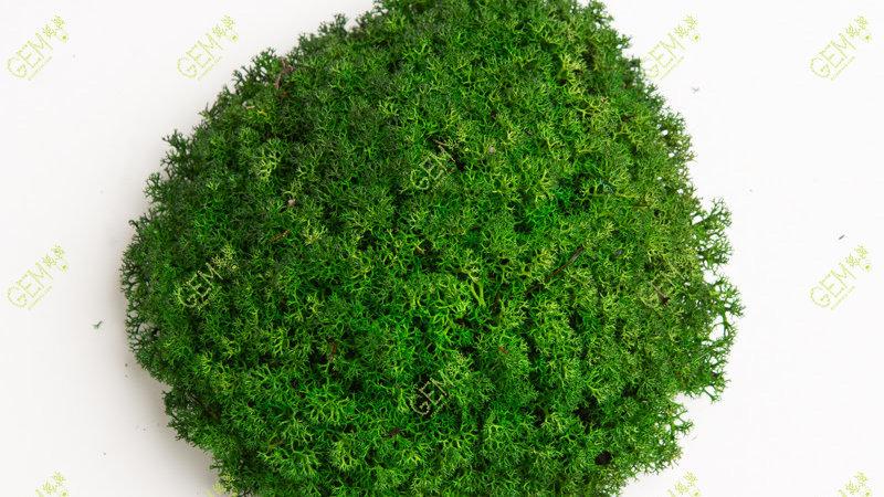 Ягель мох стабилизированный украинский GEM зеленый