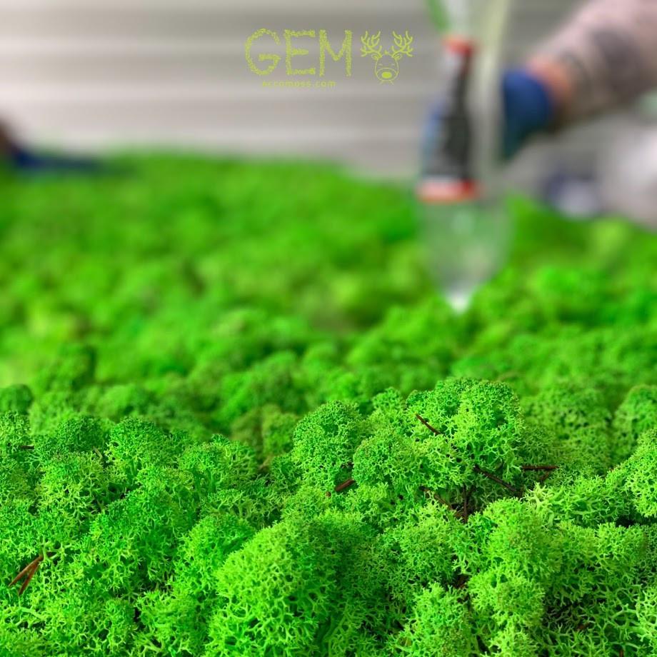 стабилизированный мох что это такое
