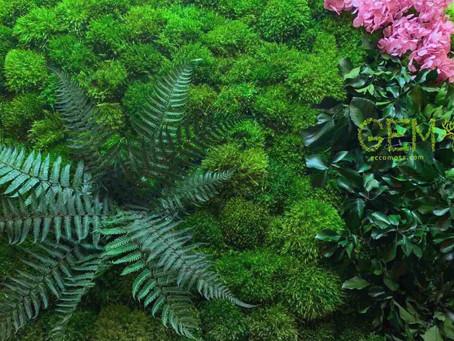 Влагостойкость  стабилизированного мха и растений