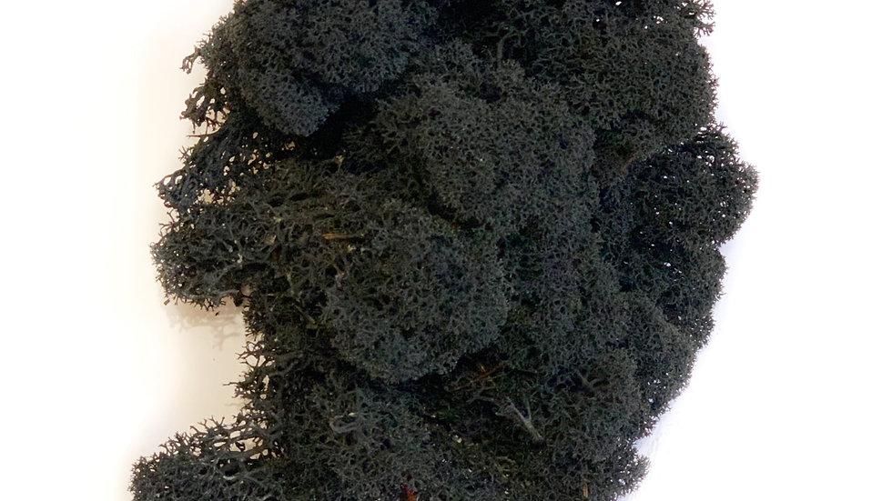 Ягель норвежский чёрный