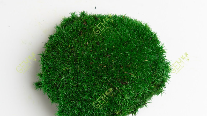 Кочка стабилизированная Green Ecco Moss изумрудно-зеленая